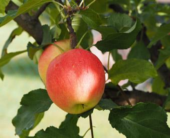 Τομέας Γεωπονίας, Τροφίμων και Περιβάλλοντος